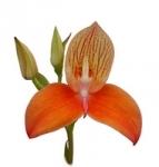 Expositions/Ventes d'orchidées, bonsaïs, cactus...